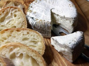 Cheese-Andrea-EmailSM