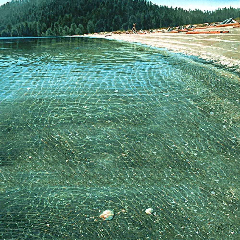 Shells-in-the-Shallows-1000