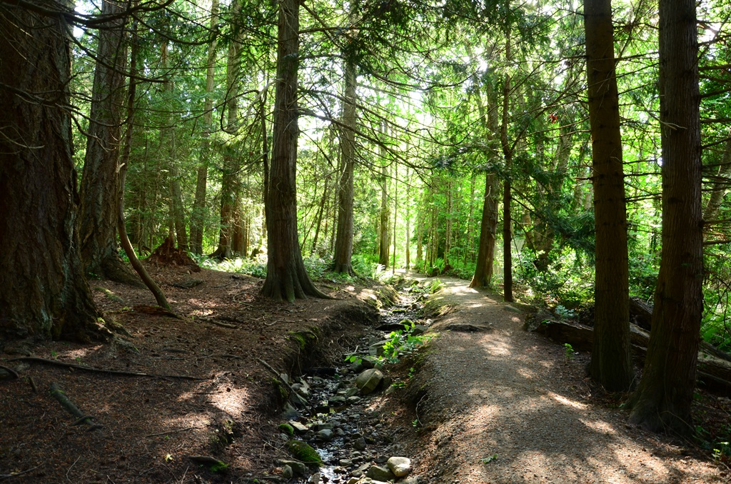 Moaut Park Trail and Stream
