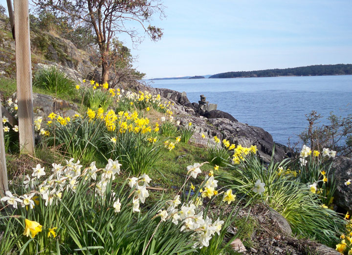 Salt Spring Island Accommodation - Daffodil Cove Cottage 3