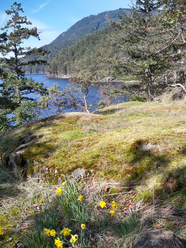 Salt Spring Island Accommodation - Daffodil Cove Cottage 4