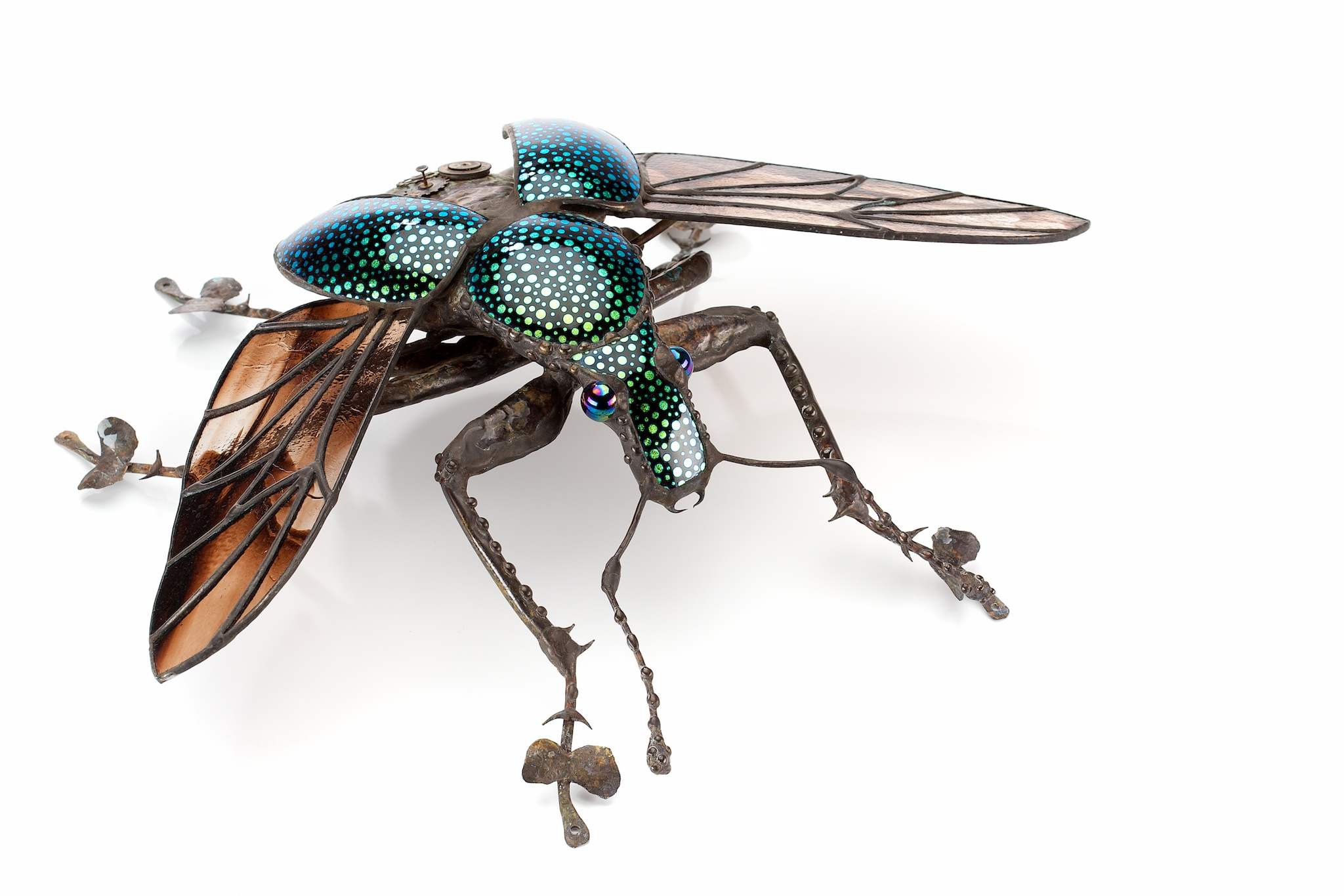 Sean Goddard Insects One Of Salt Spring Islands Famous