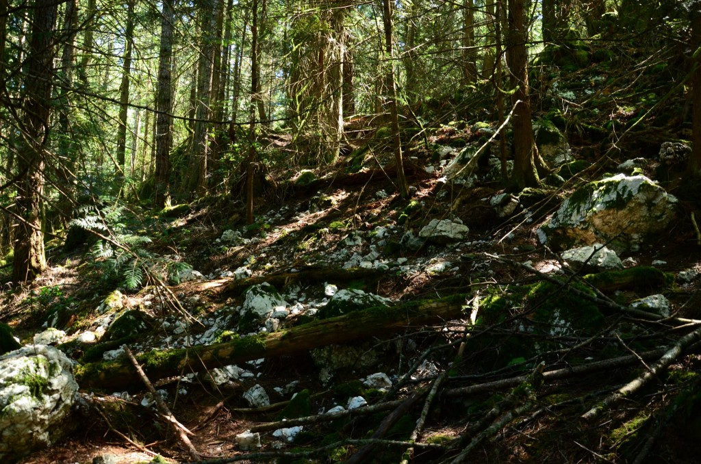Salt Spring Island Hike - Beaver Point Hall to Yeo Point - Quartz