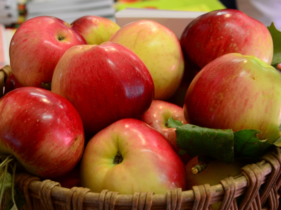 2014 Salt Spring Island Apple Festival