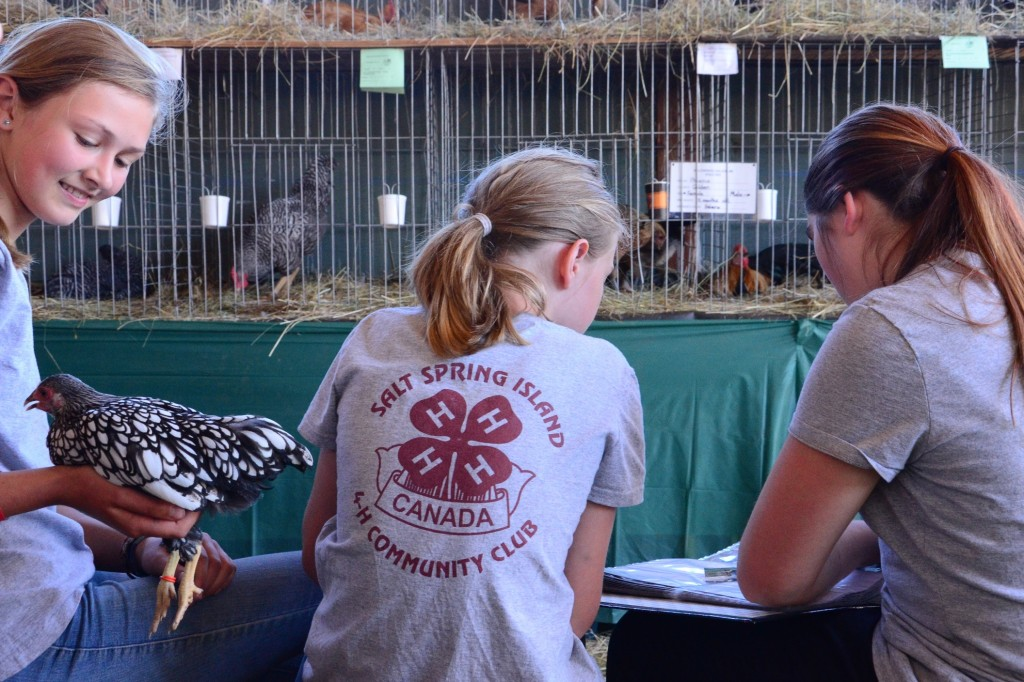4H Club at the 2014 Salt Spring Island Fall Fair