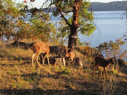 Deer on trail to shore2