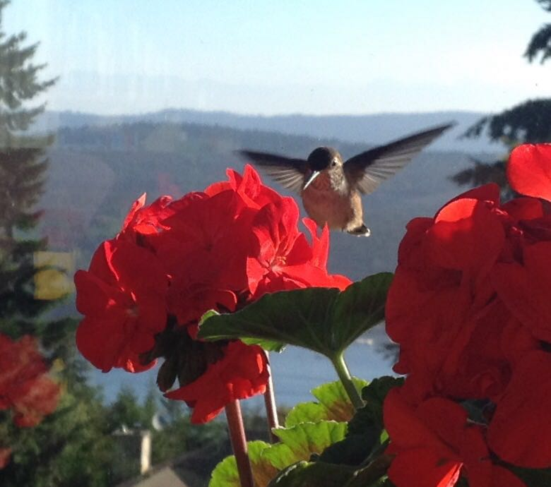 Hummingbird in the morning